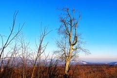 Un árbol tan hermoso imagen de archivo libre de regalías