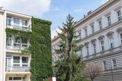 Un árbol verde alto situado en el centro de dos edificios blancos Imagenes de archivo