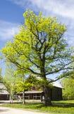 Un árbol verde del tilia en la yarda de una casa de madera Imagen de archivo