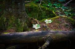Un árbol viejo caido abajo Imagen de archivo