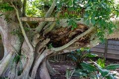Un árbol viejo etiquetó el árbol de la historia fotos de archivo