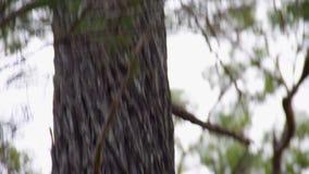 Un árbol viejo y sus ramas almacen de video