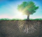 Un árbol y un suelo con las raíces y una hierba aislada imágenes de archivo libres de regalías