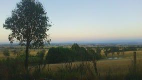 Un árbol y un Australiana pacífico Imagen de archivo