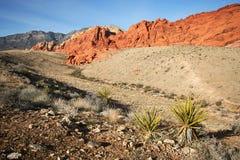 Un área nacional de la conservación de la barranca roja de la roca Fotografía de archivo