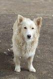 Un ââon del cane esterno la via Fotografie Stock Libere da Diritti