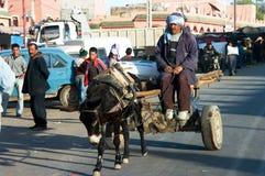 Un âne d'équitation de vieil homme au Maroc Image libre de droits