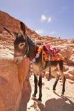 Un âne regardant vers le bas. image libre de droits