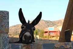 Un âne regarde la caméra sur le fond de collines un jour d'été photos libres de droits