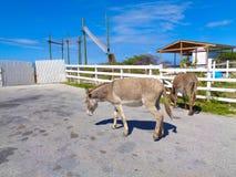 un âne sur la rue en Grèce photo stock