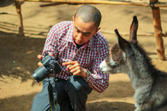 Un âne vérifiant sa photo photo libre de droits