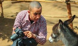 Un âne vérifiant sa photo photographie stock libre de droits
