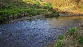 Un écoulement calme du ruisseau de Ramenka La lumière du soleil de activation de ressort réveille la nature clips vidéos