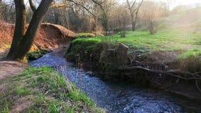 Un écoulement calme du ruisseau de Ramenka La lumière du soleil de activation de ressort réveille la nature banque de vidéos
