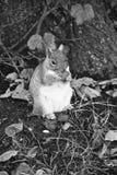 Un écureuil en parc Image libre de droits