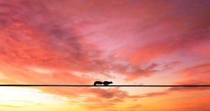 Un écureuil fonctionnant au-dessus d'un fil électrique image libre de droits