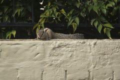 Un écureuil indien de paume Photographie stock libre de droits