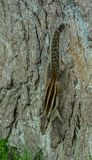 Un écureuil sur l'arbre photographie stock libre de droits