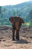 Un éléphant images stock