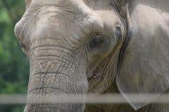Un éléphant Image stock