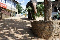Un éléphant adulte Image libre de droits