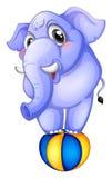 Un éléphant au-dessus de la boule de rebondissement Photos stock