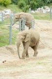 Un éléphant au zoo Image libre de droits