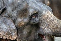 Un éléphant dans le zoo photographie stock