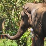 Un éléphant dans le zoo images libres de droits