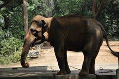 Un éléphant dans le zoo du Malacca Images libres de droits