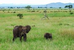 Un éléphant et un bébé image libre de droits