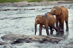 Un éléphant tapote des autres Image stock