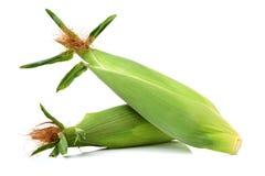 Un épi de blé image libre de droits