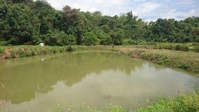Un étang à poissons nuageux naturel photographie stock
