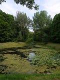 Un étang compact presque totalement envahi avec un nénuphar avec de petites fenêtres de l'eau claire avec l'herbe verte sur Photographie stock libre de droits