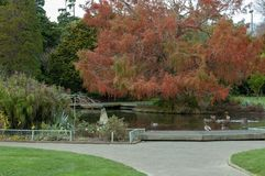 Un étang de canard en parc en automne dans le nord de Palmerston image stock