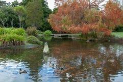 Un étang de canard en parc en automne dans le nord de Palmerston photographie stock libre de droits
