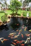 Un étang de poissons dans le jardin images libres de droits