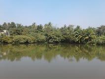 Un étang et arbres Image stock