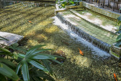 Un étang intérieur calmant avec des poissons à San Francisco photo libre de droits