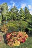 Un étang merveilleux avec des lis Photographie stock libre de droits