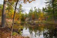 Un étang reculé entouré par couleur d'automne image stock