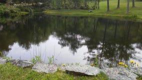 Un étang tranquille Images libres de droits