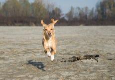 Un ‹muy feliz del †del ‹del †del perro en la playa Imágenes de archivo libres de regalías