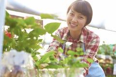 Un abbastanza giovane fiorista asiatico Working nel giardino immagine stock