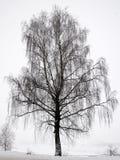 Un abedul-árbol en el ambiente del invierno Foto de archivo
