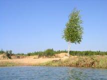 Un abedul cerca del lago del verano Foto de archivo libre de regalías