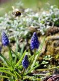 Un abejorro del vuelo en un jardín con las flores Foto de archivo libre de regalías