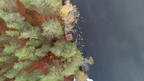 Un'abetaia coperta in un gelo leggero, il paesaggio rigido di autunno stock footage
