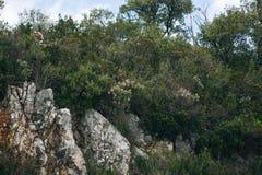 Un acantilado o una colina con los árboles, los arbustos y la otra vegetación Cielo azul en el fondo Imagen de archivo